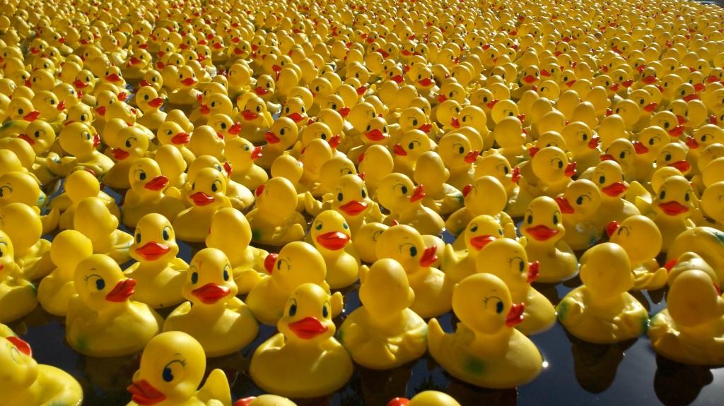 duck-race-carnival